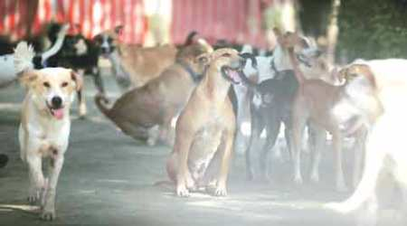 Dogs take over Delhi streets