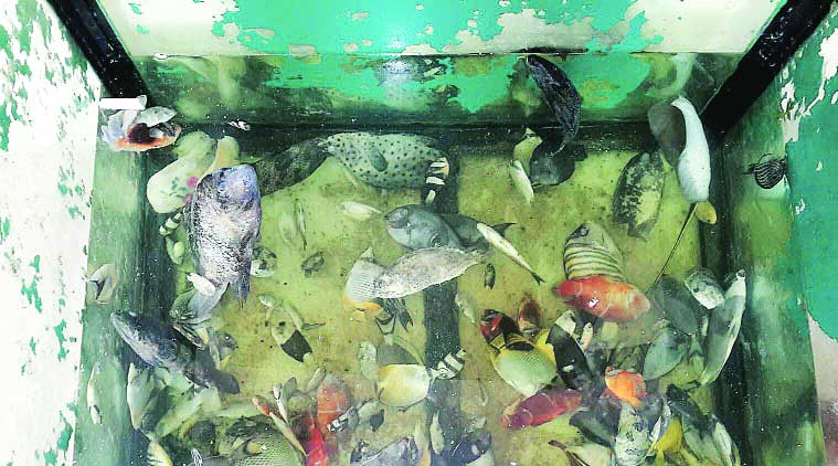 Taraporevala Aquarium : 700 fish dead in 5 months, heat on officials | The Indian Express