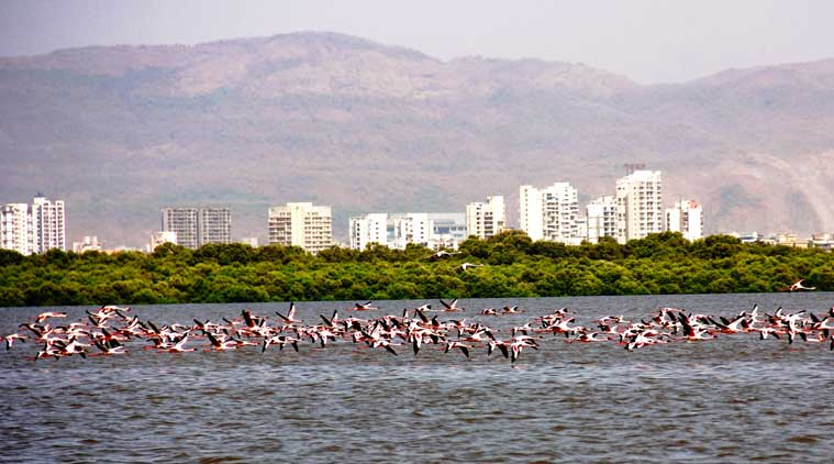 Flamingoes at the Thane Creek