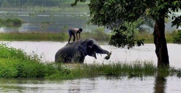 Floods in Assam, Floods in Guwahati, Floods in Kaziranga, Floods in Morigaon, Assam Floods, Indian monsoon Floods, India Floods, Monsoon Floods, Heavy Rainfall, Heavy rains, Heavy rains in Assam, Assam Floods Information, Assam Floods rescue operation, Assam Floods News, Floods News, India Floods News