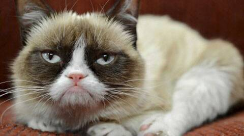 Grumpy Cat, Grumpy Cat wax statue, Madame Tussauds, wax figure, San Francisco, trending story