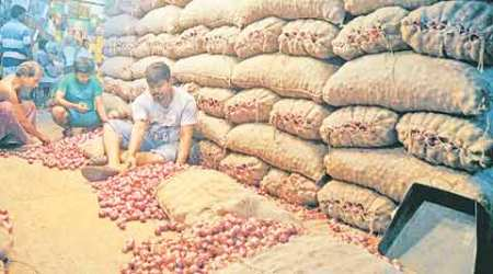 SAPNA to distribute high-yield seeds from next season