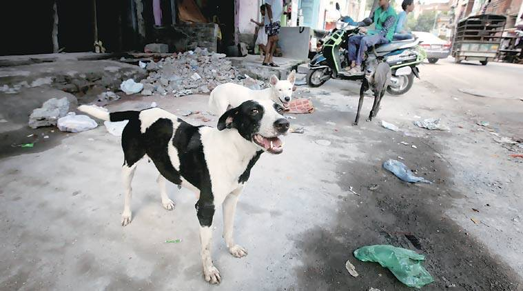 kerala street dogs, kerala dogs, kerala street dog killings, kerala street dog deaths, kerala strays, kerala stray dogs, kerala government, kerala chief minister, p vijayan, kerala chief minister vijayan, kerala news, india news