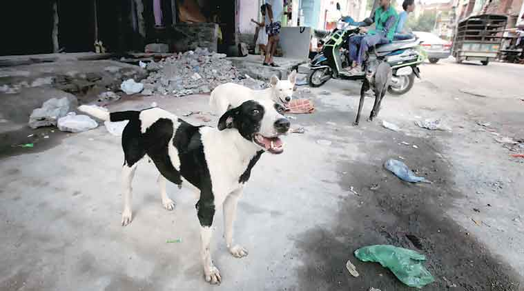 stray dogs, killing street dogs, killing stray dogs, supreme court, animal cruelty, indian express news, india news