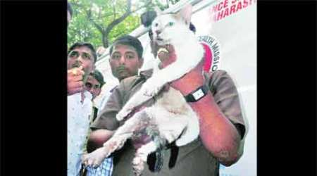 Thane building collapse: In his dying moments, he saved his kitten
