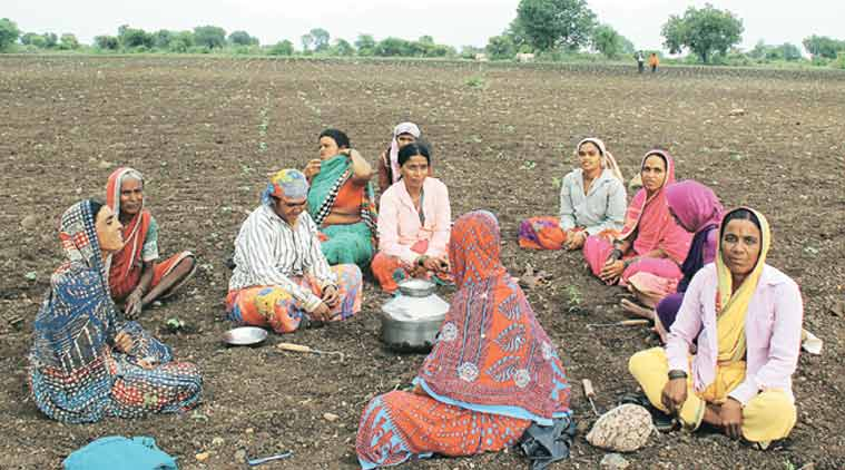 Marathwada, Marathwada drought, drought in Marathwada, drought effect, Marathwada farmer, drought, migration, migration due to drought, mumbai news, city news, farmers crop loss, farmers crop destruction, maharashtra farmers loss, maharashtra farmers suicide, maharashtra news, india news, nation news, national news, Indian Express
