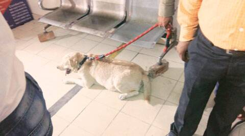 Somnath Bharti's pet Don gets clean chit from the court
