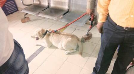 Somnath Bharti's dog, who was accused of biting his wife, is dead