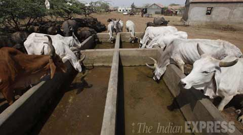 VHP workers smear grease on municipal officers over cow deaths