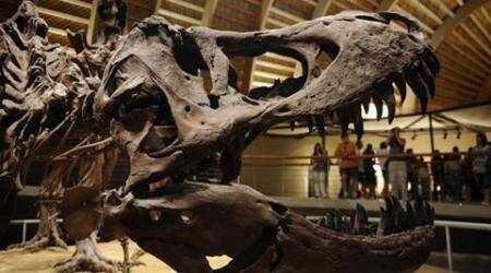 US researchers may have dug up new dinosaur species inMontana
