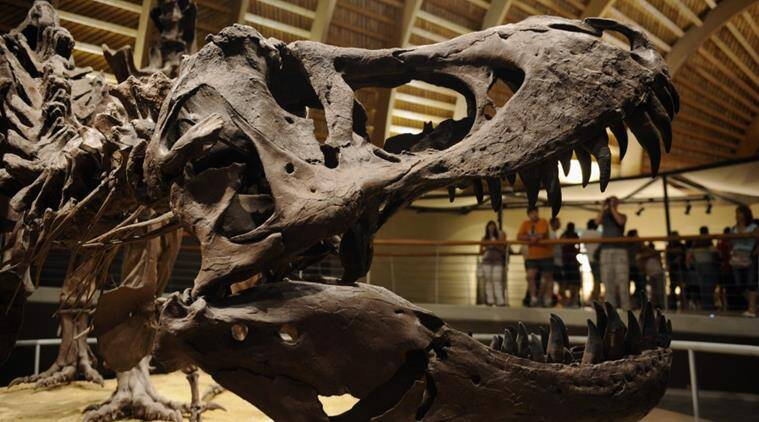 dinosaurs, dinosaur brain tissue, dinosaur brain tissue fossil, fossilised dinosaur tissue, fossilised brain tissue dinosaur, science news