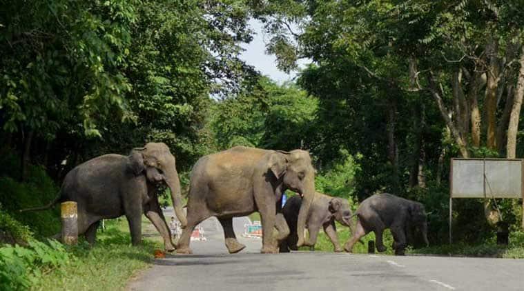 Assam elephants death, elephants train accident, assam elephants accident, elephants killed on train tracks, elephants killed by train, assam news, india news, latest news, indian express