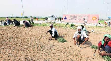 Visit on September 11: GMADA plants saplings of 35 varieties along the airport road to welcome PM