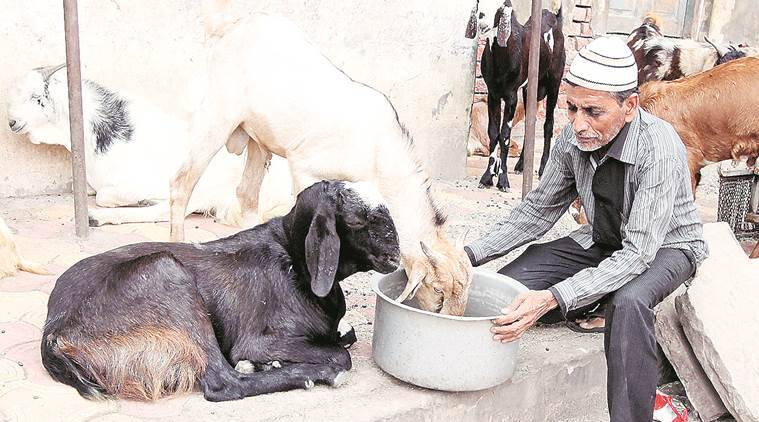 qurbani, animal sacrifice, NCM, bakr Eid, ban goat ban, lucknow news, indian express