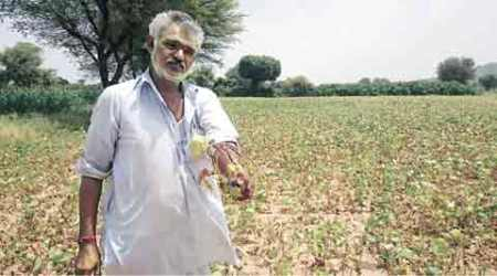 Meanwhile, Rajasthan farmers hold out hope for rains – now
