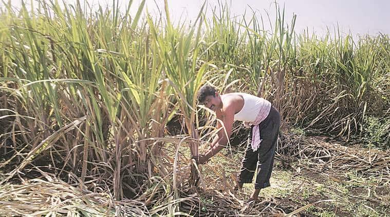 sugar mills, maharashra sugar mills, sugar mills maharashtra, maharashtra news, devendra fadnavis, maharashtra sugar sector, sugar sector maharashtra, maharashtra news, india news, indian express