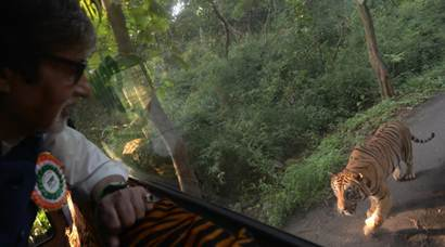 Amitabh Bachchan takes a jungle safari; chased by a tiger