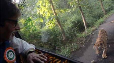 Big B takes jungle safari; tweets about being chased by a tiger