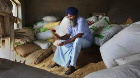 basmati farmers, india iran basmati trades, basmati iran export, basmati export rates, basmati price, basmati wholesale rate, basmati business, punjab basmati farmers, punjab news, agricultural news, india news
