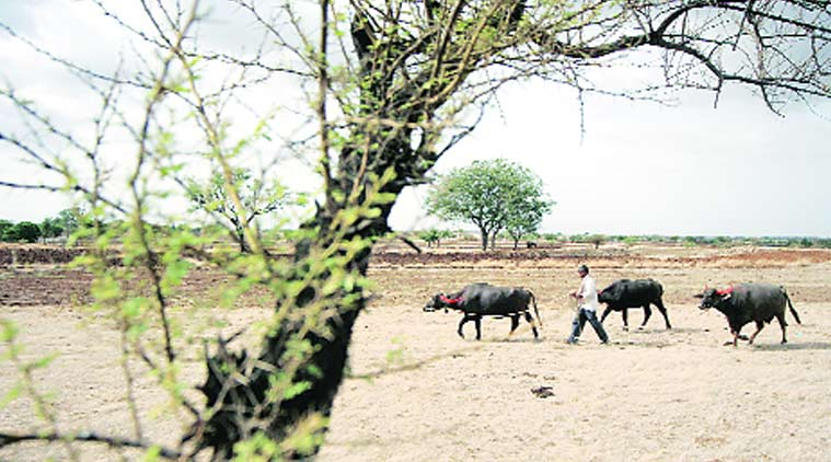 Over 14,000 villages across the state have been declared drought affected.