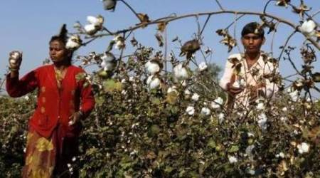 Patidar agitation: Bureaucrat links stir to fall in cotton prices