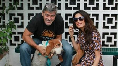 George Clooney, Amal Alamuddin, George Clooney Amal Alamuddin adopt rescue dog, George Clooney and Amal Alamuddin, Entertainment news