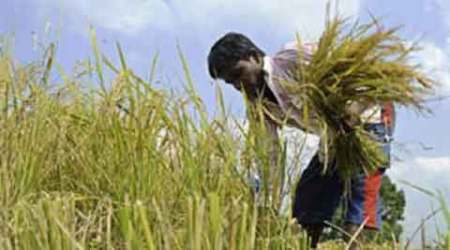 Dry October spells rabi gloom