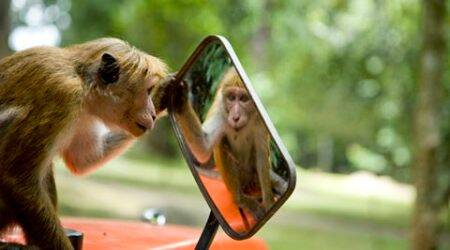 animal communities, animal behaviour, animal traits, animal kingdom, ranjit lal column, ranjit lal indian express, environment news, science news