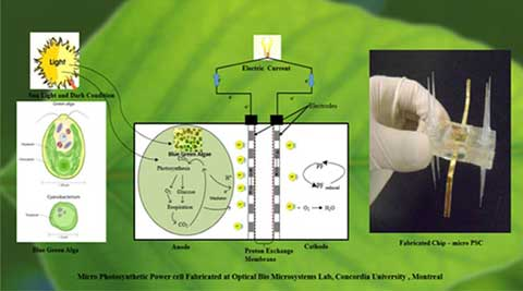 Green energy: Photosynthesis may be the next source of green energy generation