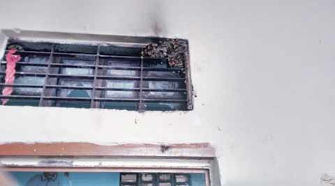Wasps take over Delhi school, scared students give classes a miss