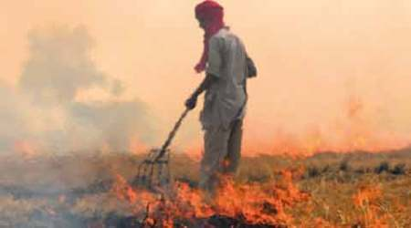 Burning of paddy stubble reducing crop yield in region: IISER study