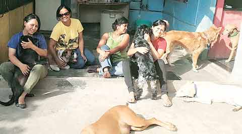 Dumped By Families Dog S Life For Pedigreed Breeds India News