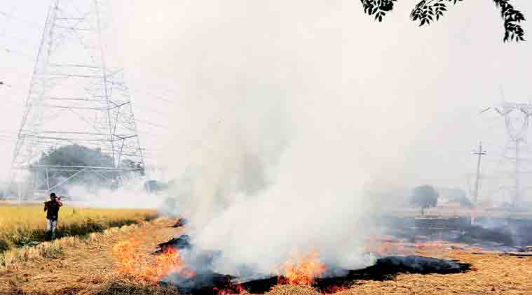 A field on fire near Moga in Punjab.