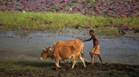 Odisha: Centre seeks details of farmer deaths