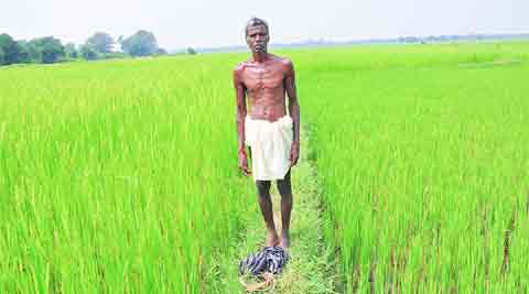 District Zero, Nanbarangpur, Lebo Randhari, adivasi Bhatra community, nabarangpur rice, nabarangpur paddy, nabarangpur poverty, Odisha government, indian express