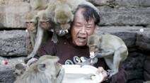 Long-tailed macaques eat fruits from a plate held by festival organizer Yongyuth Kitwattananusorn during the annual Monkey Buffet Festival at the Pra Prang Sam Yot temple in Lopburi, north of Bangkok, Thailand November 29, 2015.  The festival provides food and drinks to the local monkey population, which numbers more than 2,000, to thank them for drawing tourists to the town. REUTERS/Jorge Silva