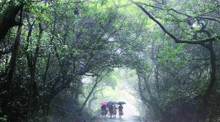 Mahabaleshwar more polluted during weekends, says IITM study