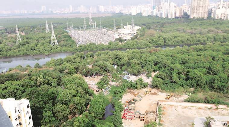Bombay hc, high court, bombay high court, advocate general, bombay advocate general, maharashtra high court, mumbai wetlands, wetlands protection, wetlands encroachment, mumbai news