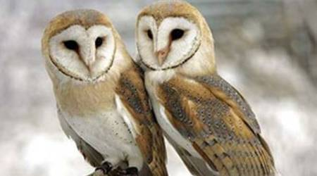 Owl rescued from man who would have sold it for Rs80,000