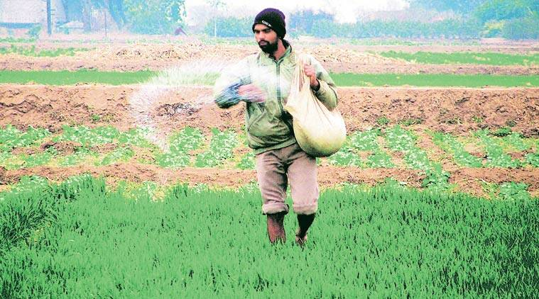 pesticides, pesticide ban, parliament session, agriculture ministry, rajya sabha, insecticides, harmful pesticide