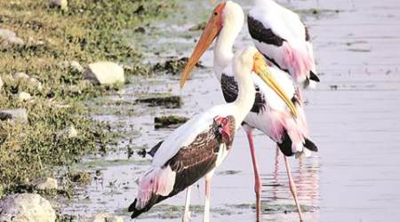 J&K: Sharp dip in number of migratory birds, rapid urbanisation likely cause sayofficials