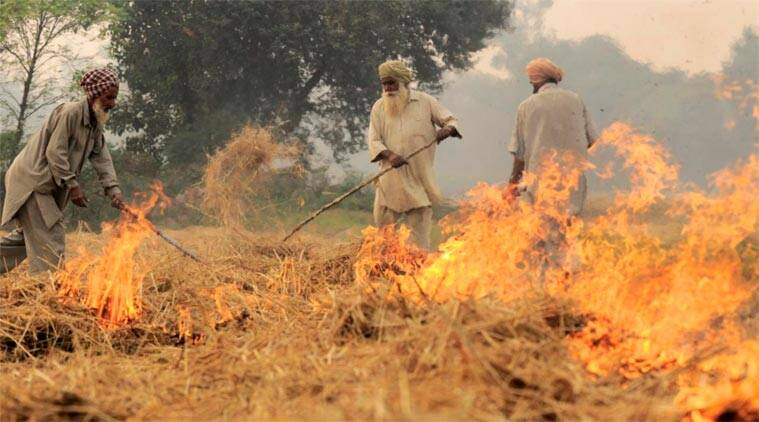 stubble burning, punjab crop burning, crop stubble burnt, mansa district punjab, punjab farmers burn stubble, agriculture punjab, punjab news, indian express
