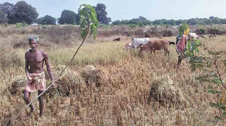 crop loans, crop loans chhattisgarh, kharif crops, agriculture in india, loan to farmers, india news, indian express,