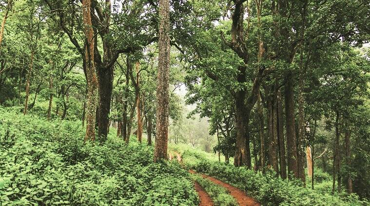 A forest trail at the BR Swamy Temple Wildlife Sanctuary. (Source: Neelima Vallangi)