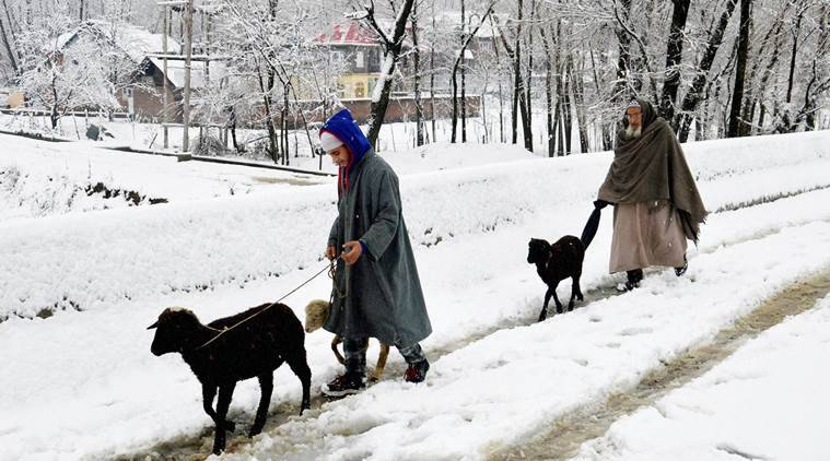 Anantnag : An elderly man along with his grandson walks with their sheep on a snow covered road after heavy snowfall, at Dooru Shahabaad in Anantnag district on Saturday. PTI Photo (PTI12_12_2015_000136B)