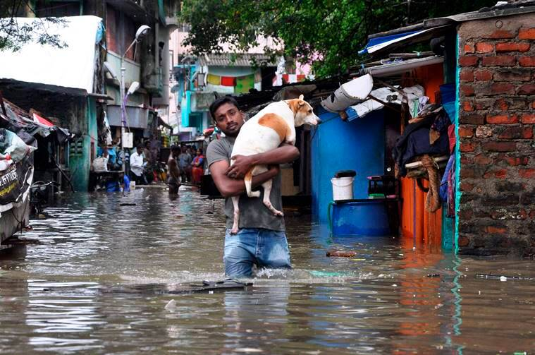 A man carries a dog and wades through a flooded street in Chennai. AP Photo