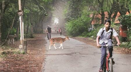 Forest essential: Why Mumbai's Sanjay Gandhi National Park is a blessing