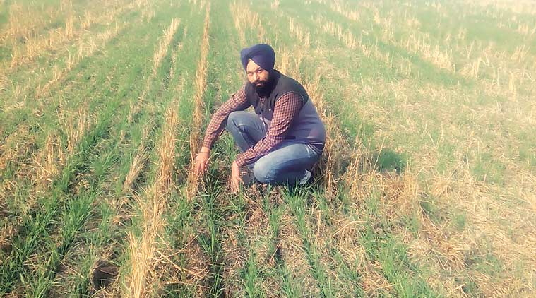 punjab agriculture, india agriculture, india news, punjab news, punjab paddy burning, paddy burning, latest news