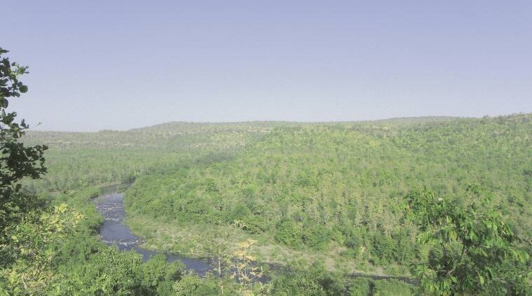 The Kolar river, a tributary of the Narmada, that flows through the sanctuary. (Source: Dhananjay Vijay Singh)