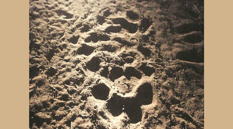 Tiger pugmarks in the dark during the long trek back. (Source: Raza Kazmi)
